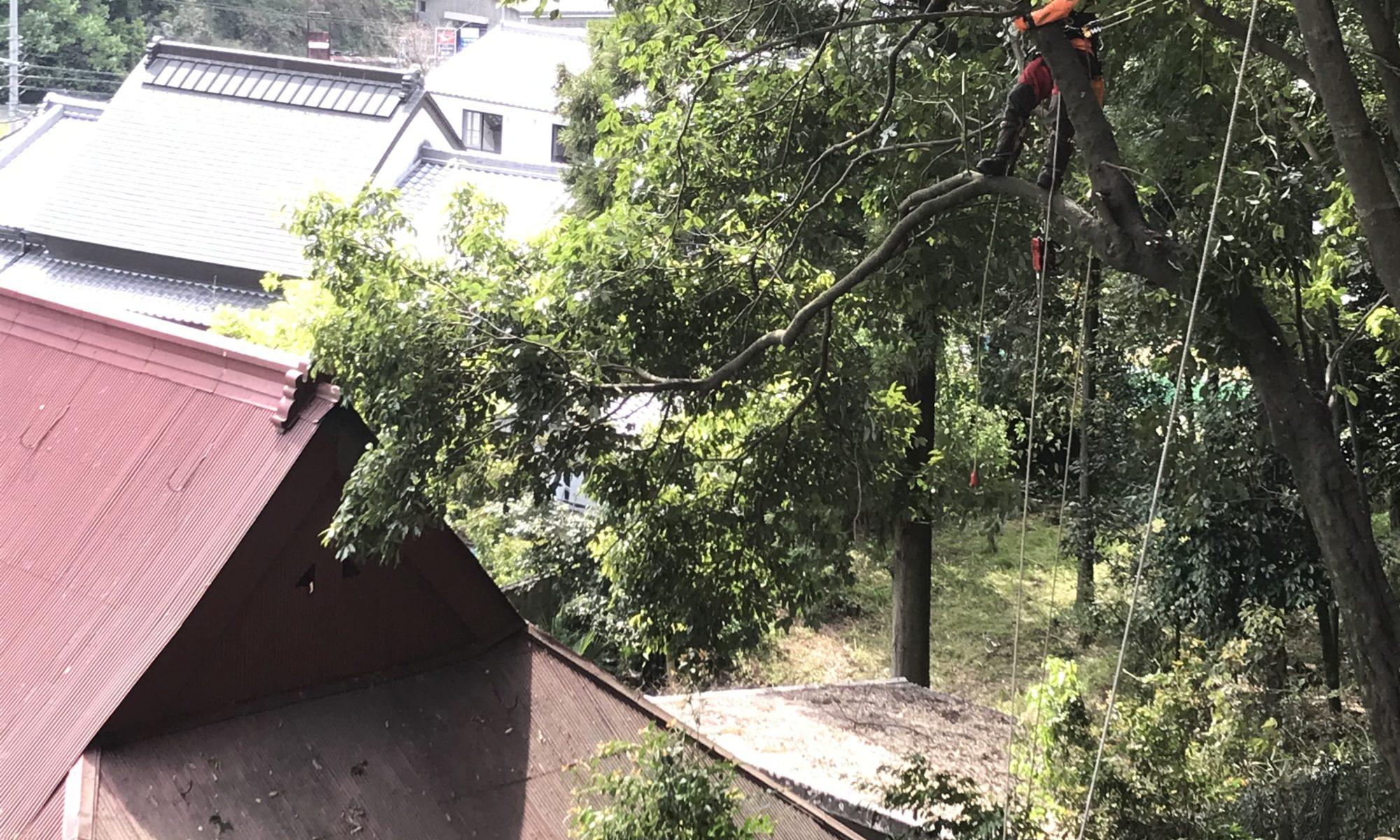 民家の裏山樹木伐採